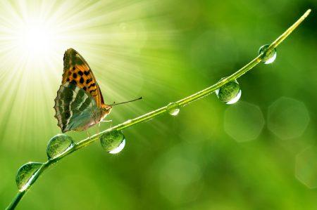 autoestima, asertividad, como valorarse, como amarse a uno mismo, aceptar la sombra